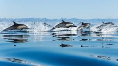 Wonderful Dolphins Wallpaper 47064