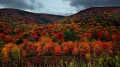 Fall Wallpaper 46931
