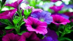 Pink and Purple Flowers Wallpaper 45231