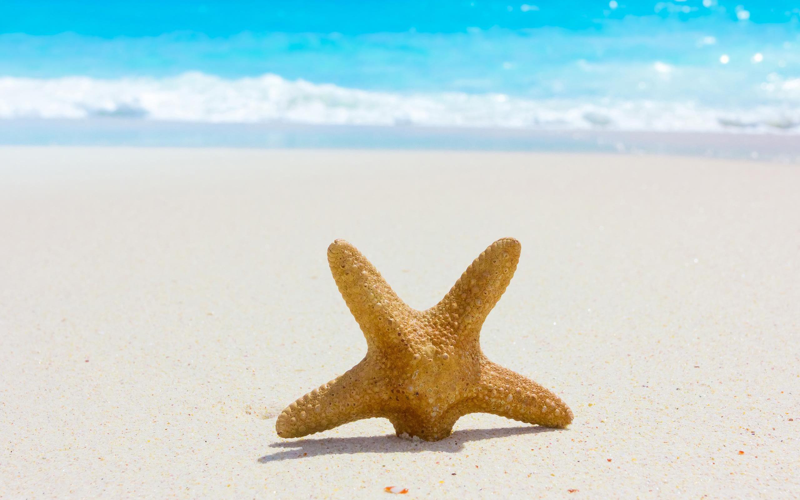 fantastic starfish wallpaper 46365