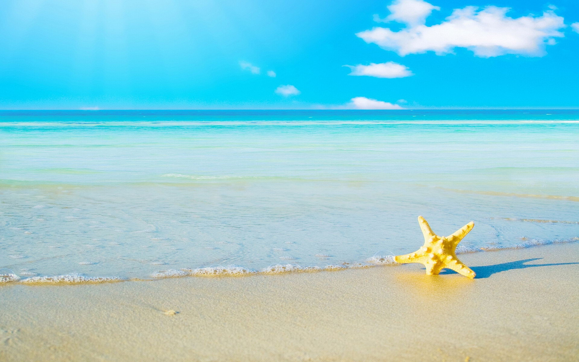 starfish wallpaper 46370