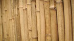 Bamboo Wallpaper 46122