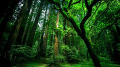 Forest Wallpaper 46710