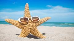 Funny Starfish Wallpaper 46366
