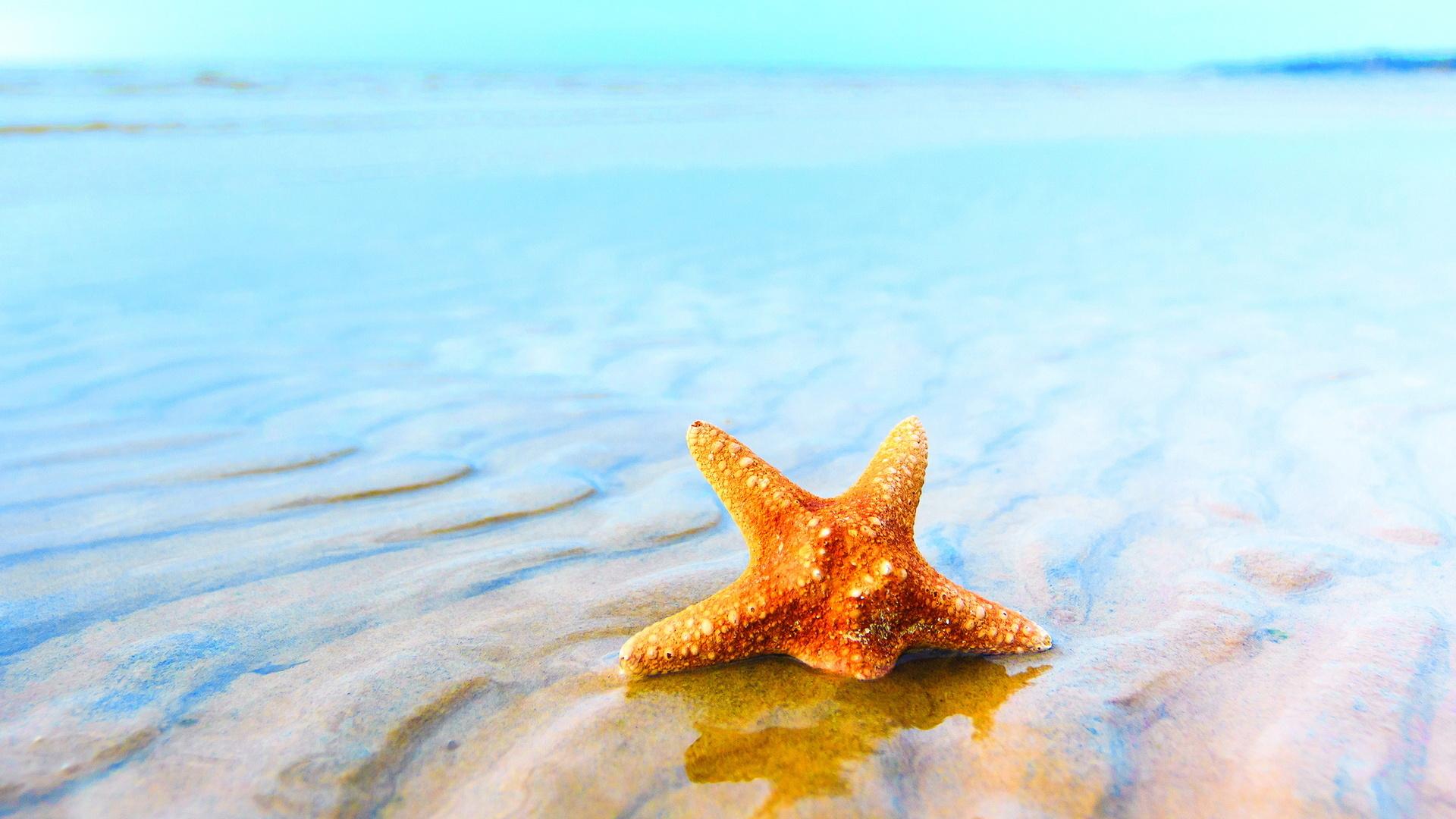 wonderful starfish wallpaper 46364