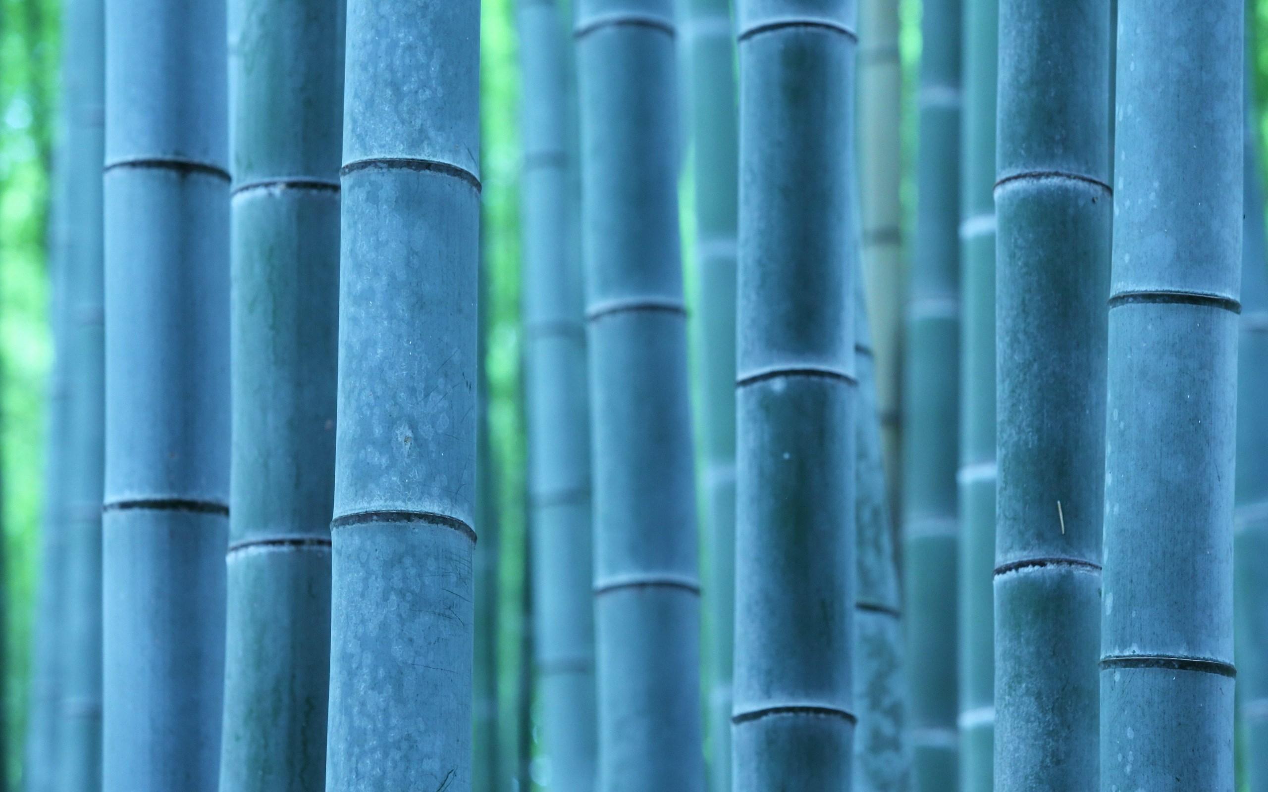 bamboo close up wallpaper 45262