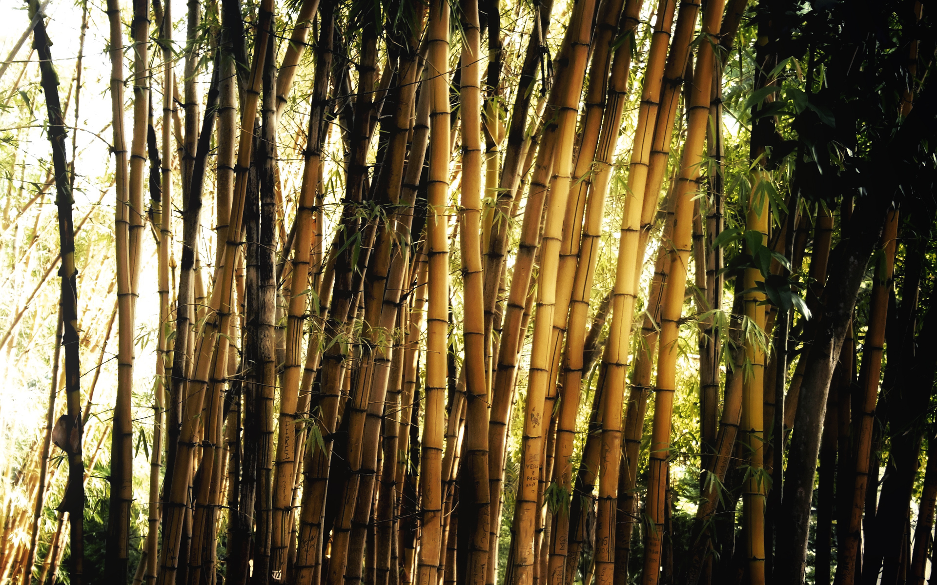 fantastic bamboo wallpaper 45260