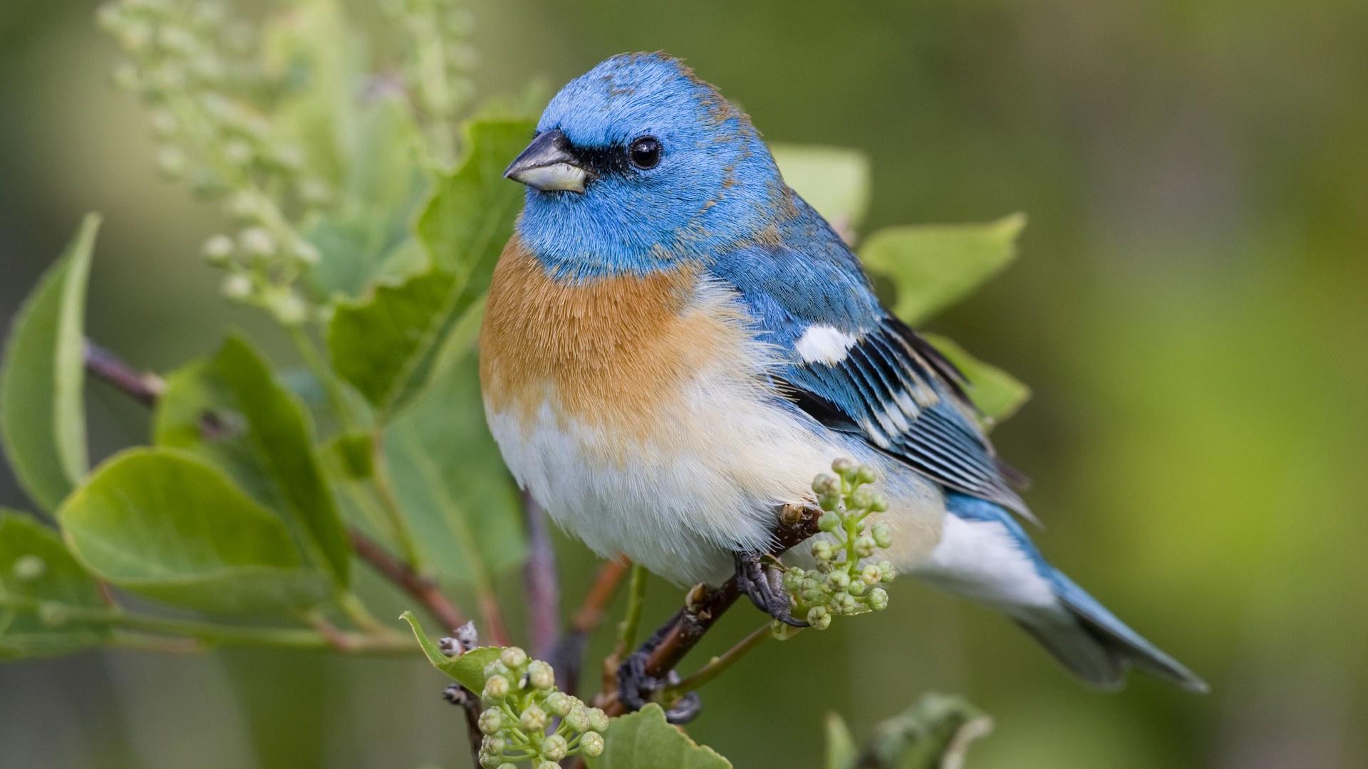 lovely bird wallpaper 46012