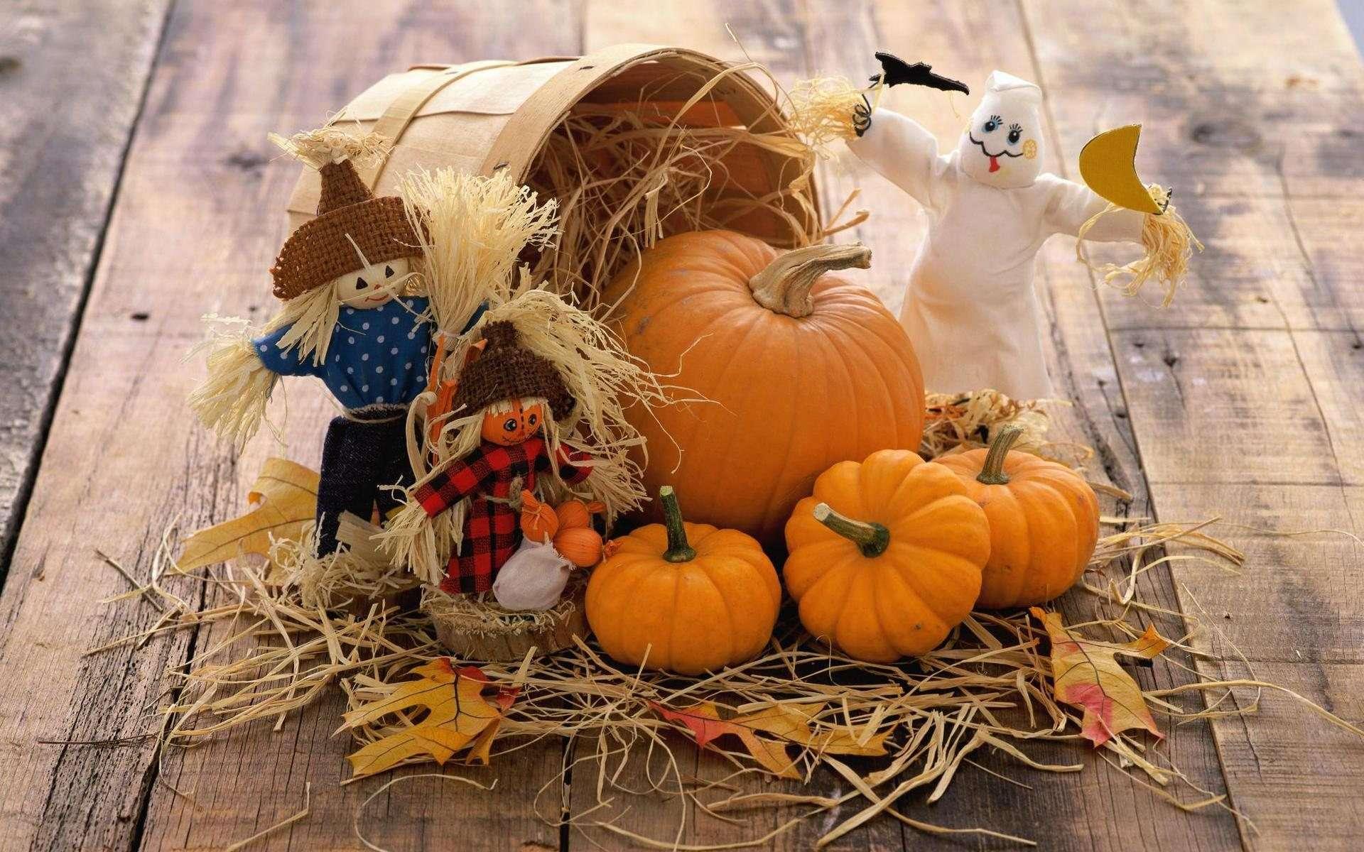 pumpkin wallpaper 48686