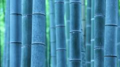 Bamboo Close Up Wallpaper 45262