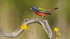Colorful Bird Wallpaper 46011