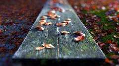 Fall Leaves Wallpaper 48684