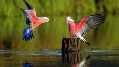 Lovely Parrot Wallpaper 46005