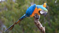 Macaw Wallpaper 46008