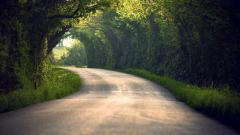 Nature Tunnel Wallpaper 45966