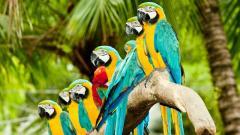 Parrot Wallpaper 46004