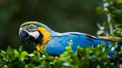 Wonderful Macaw Wallpaper 46009