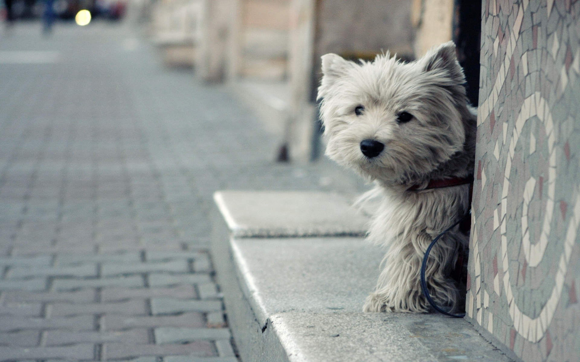 yorkshire terrier wallpaper 48812