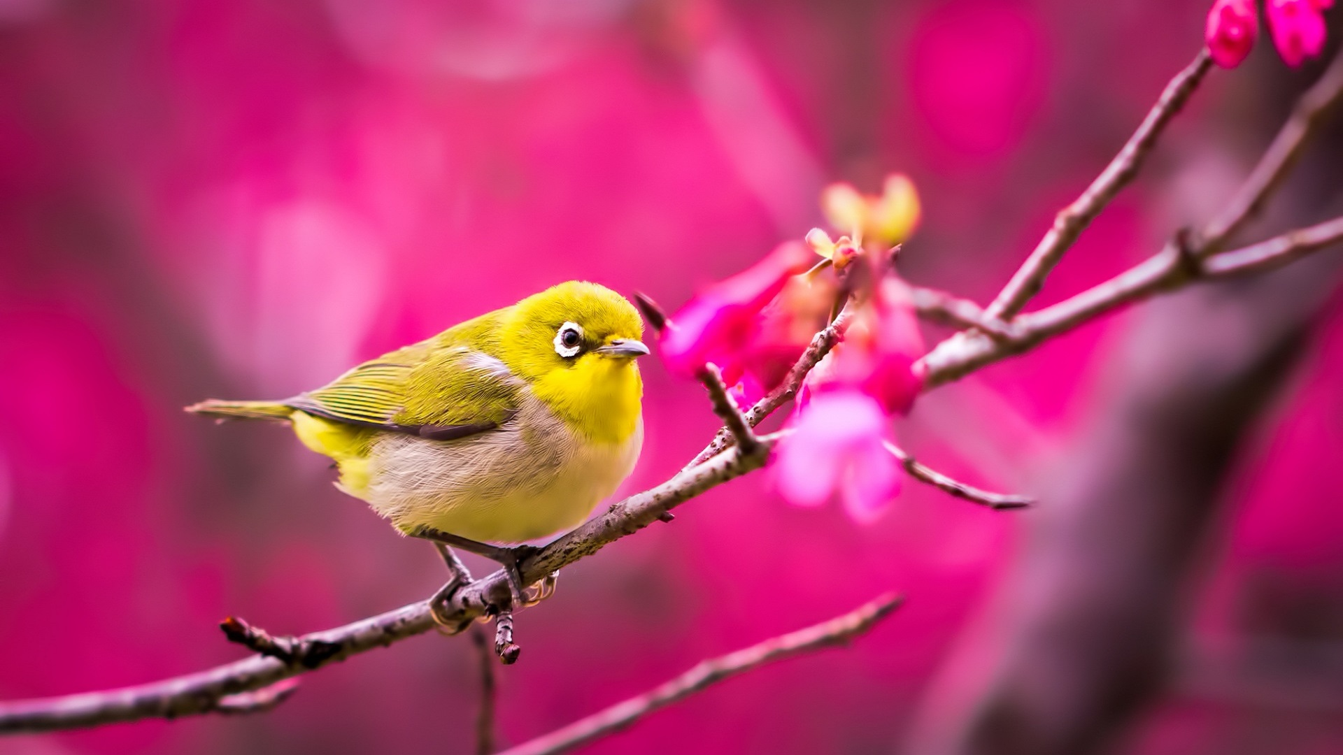 pretty little bird wallpaper - photo #14