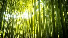 Gorgeous Bamboo Wallpaper 45258