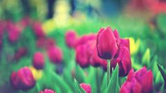 Lovely Photography Wallpaper 45222
