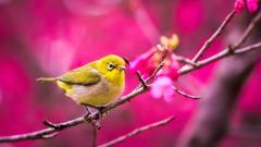 Pretty Bird Wallpaper HD 46013