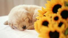 Puppy Wallpaper 45378