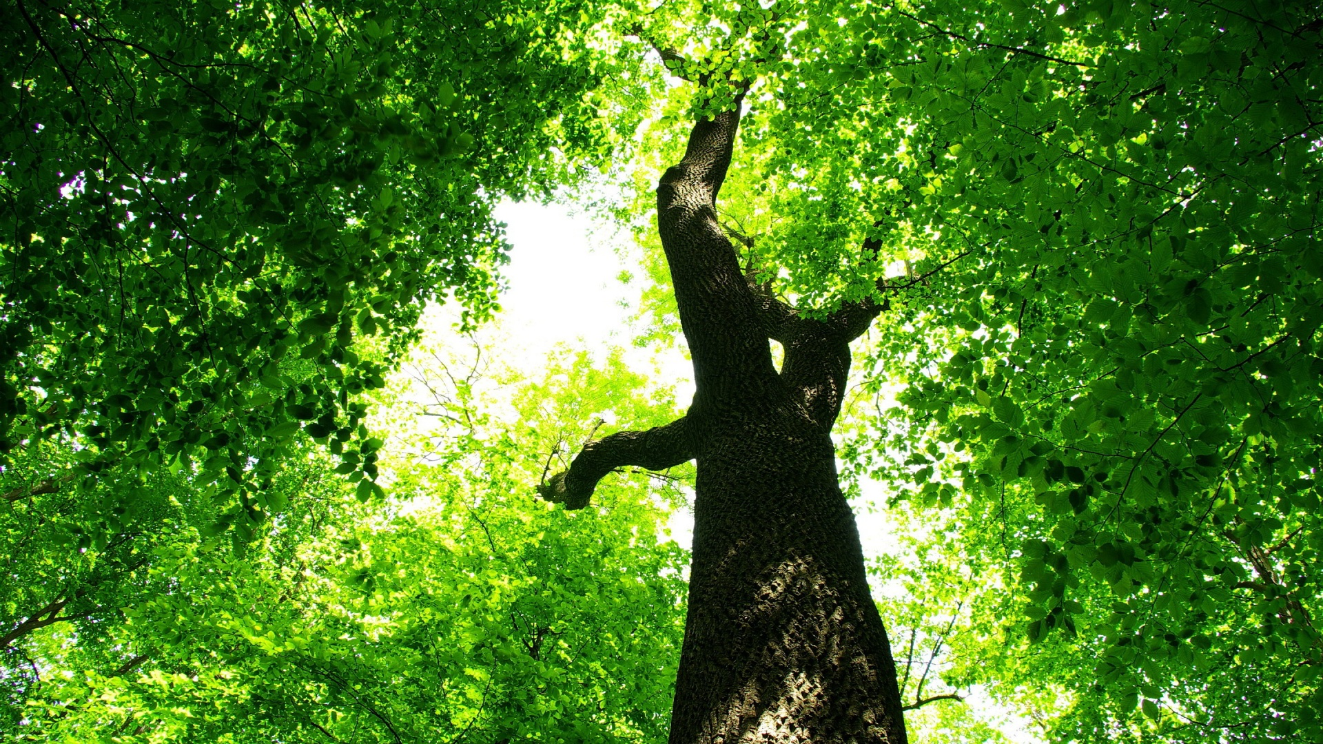 Lovely tree wallpaper 46053 1920x1080 px for Tree wallpaper for walls