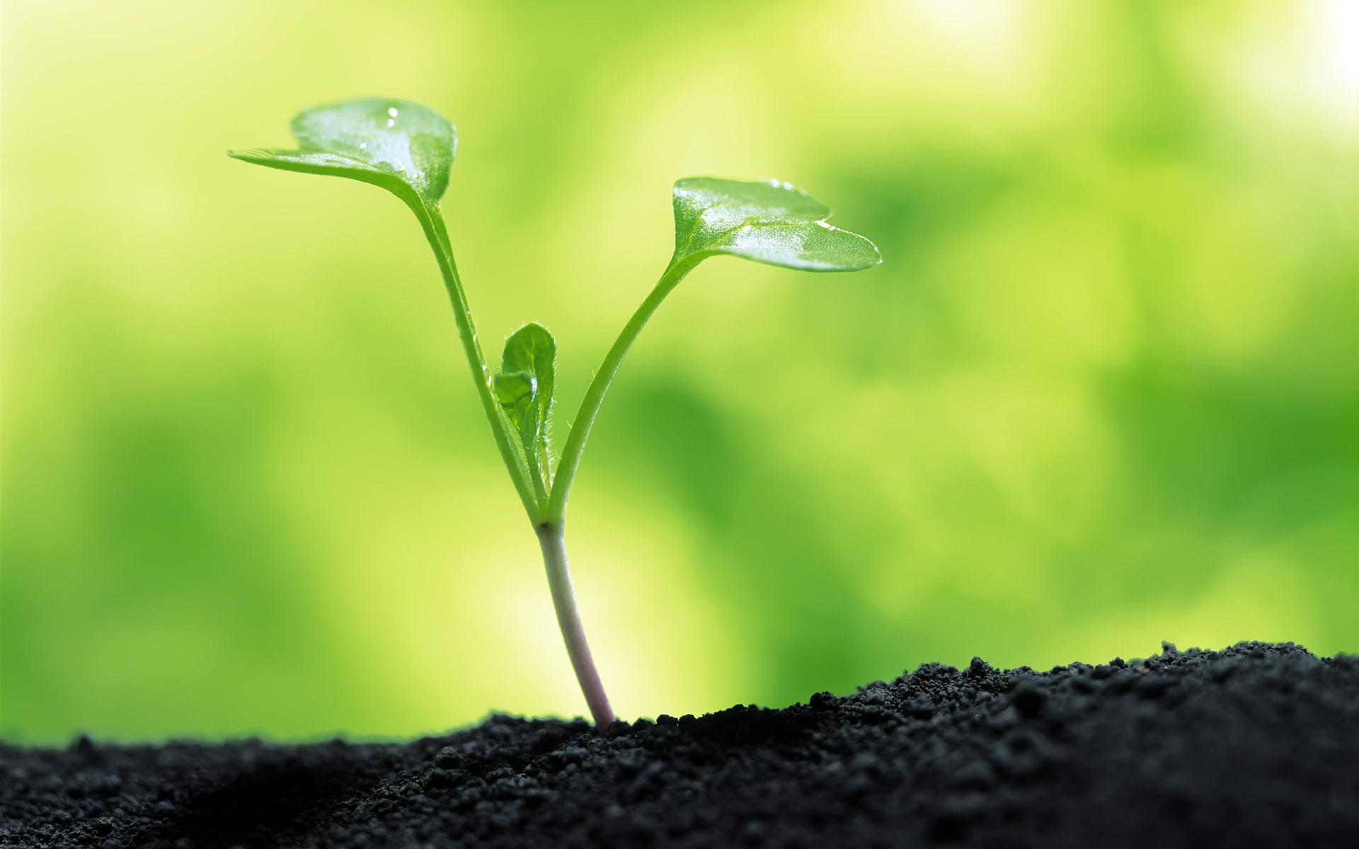 Plant Close Up Wallpaper 46699