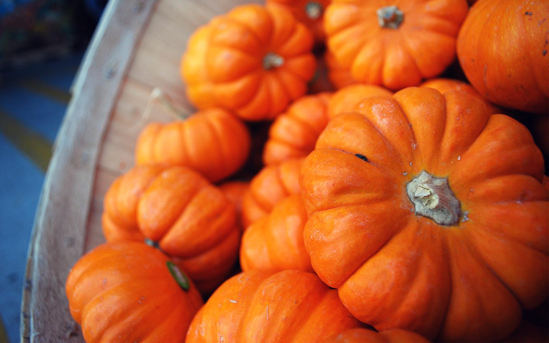 pumpkin wallpaper 46027