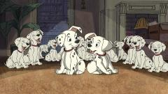 101 Dalmatians Wallpaper 46642