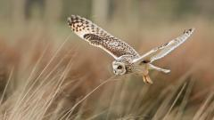 Fantastic Owl Wallpaper 46647
