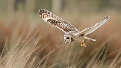Fantastic Owl Wallpaper 46647