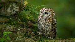 Owl Wallpaper 46645