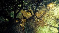 Vintage Tree Wallpaper 46055