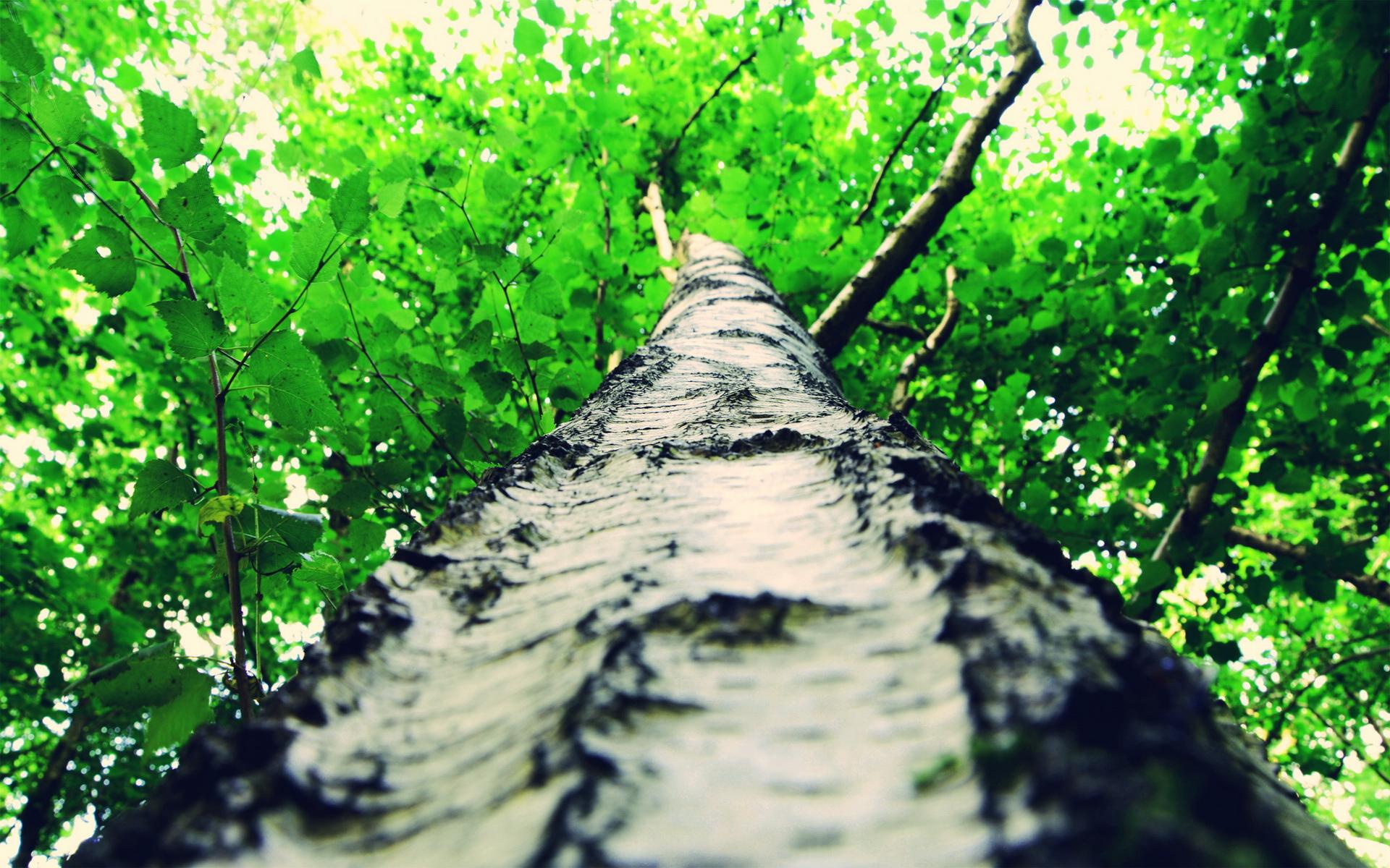 tree bark wallpaper 46054
