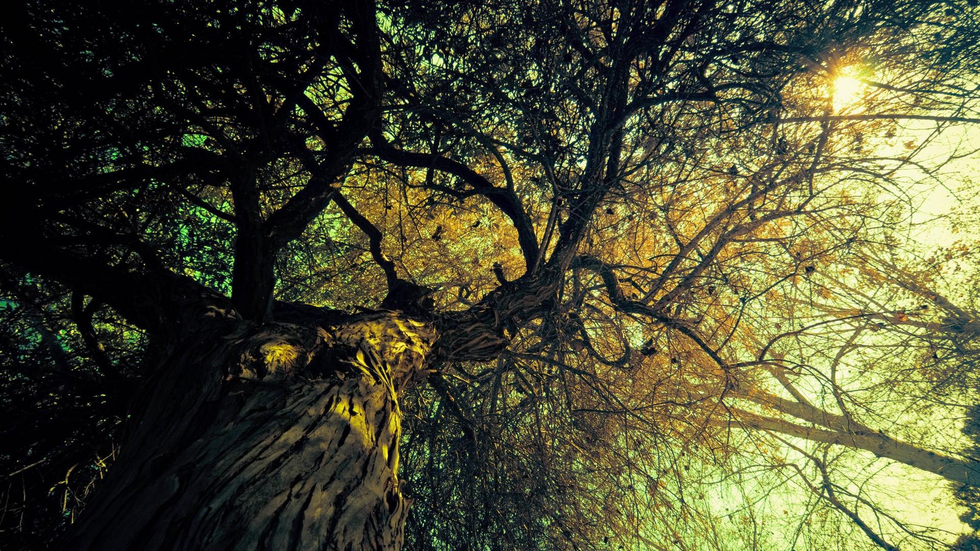 Great Wallpaper Mobile Vintage - vintage-tree-wallpaper-46055-47341-hd-wallpapers  Image_1004355.jpg