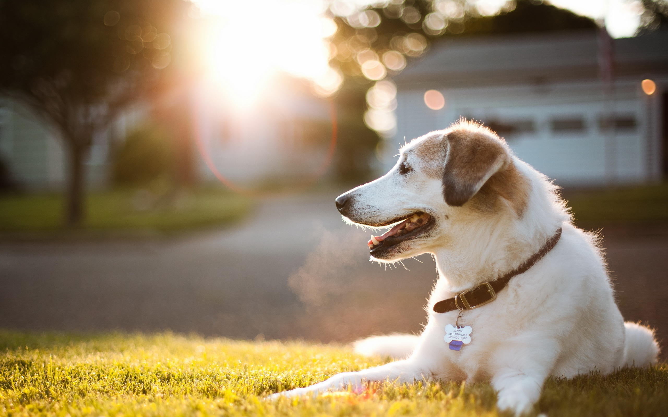 Dog Wallpaper Hd 47738 2560x1600px