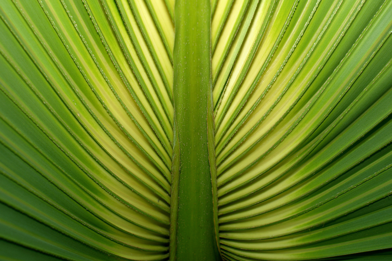 palm leaf close up wallpaper 46266 3000x2000 px