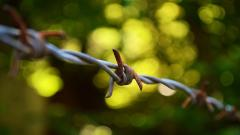 Barb Wire Wallpaper 46377