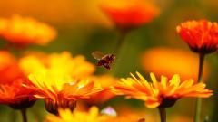 Fantastic Honey Bee Wallpaper 46779