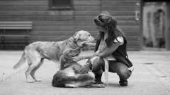 Girl With Dogs Wallpaper 46602