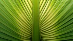 Palm Leaf Close Up Wallpaper 46266