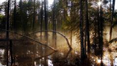 Swamp Wallpaper Background 48982