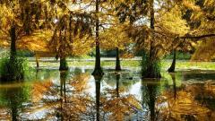 Swamp Wallpaper HD 48981