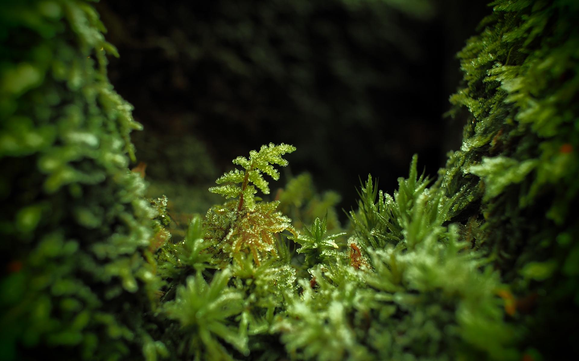 moss macro wallpaper 49472