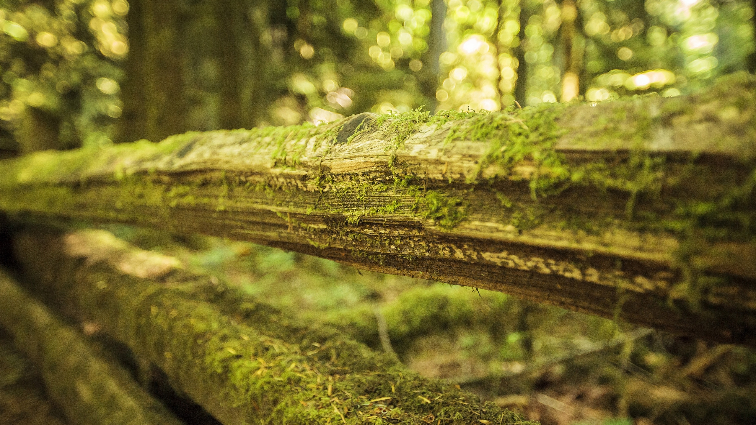 Moss On Wood Wallpaper Background 49474 2560x1440 Px