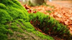Moss Desktop Wallpaper 49471
