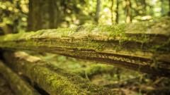 Moss On Wood Wallpaper Background 49474