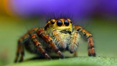 Spider Wallpaper Pictures 49667